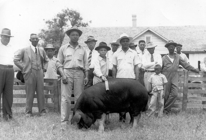 "Image of men and boys with hog, from ""Toward a Better Living"" collection"